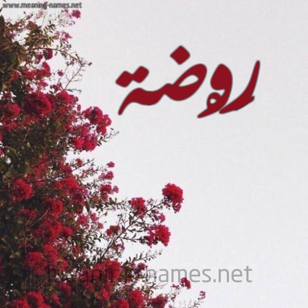 صورة اسم رَوْضة RAODH شكل 18 صوره الورد الأحمر للإسم بخط رقعة