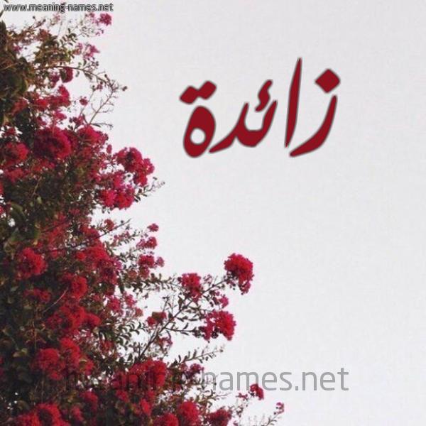 صورة اسم زائدة Zaeda شكل 18 صوره الورد الأحمر للإسم بخط رقعة