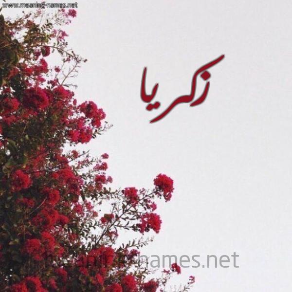 صورة اسم زكريا Zakria شكل 18 صوره الورد الأحمر للإسم بخط رقعة