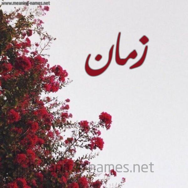 صورة اسم زمان Zman شكل 18 صوره الورد الأحمر للإسم بخط رقعة