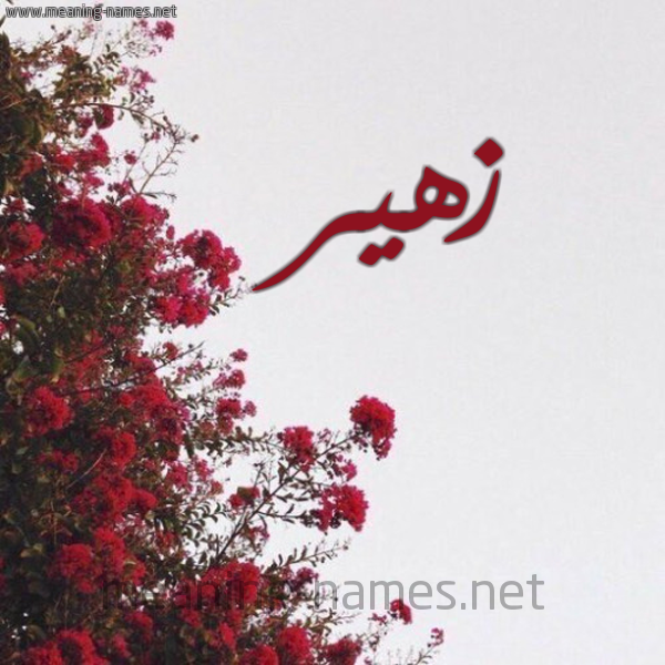 شكل 18 صوره الورد الأحمر للإسم بخط رقعة صورة اسم زهير Zohyr