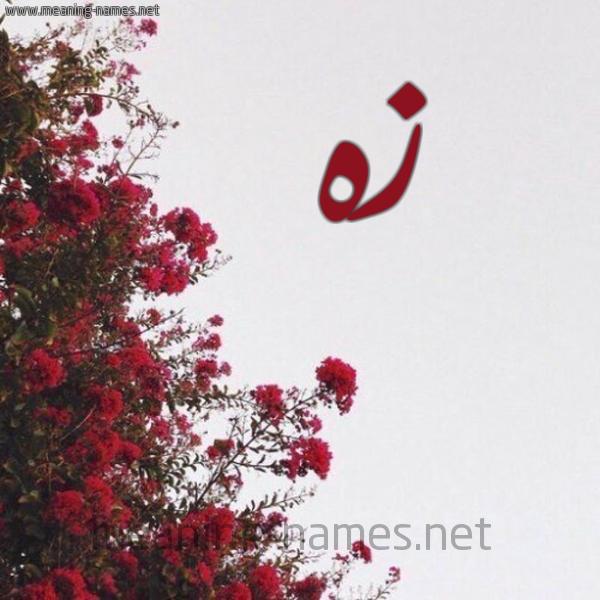 صورة اسم زه ZH شكل 18 صوره الورد الأحمر للإسم بخط رقعة