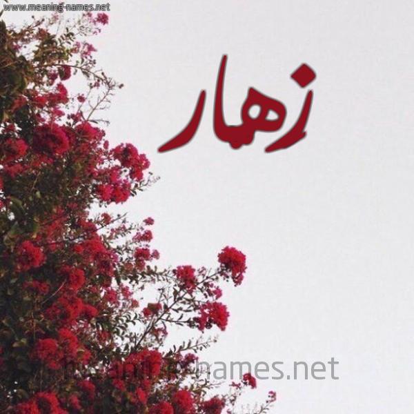 شكل 18 صوره الورد الأحمر للإسم بخط رقعة صورة اسم زَهّار ZAHAR