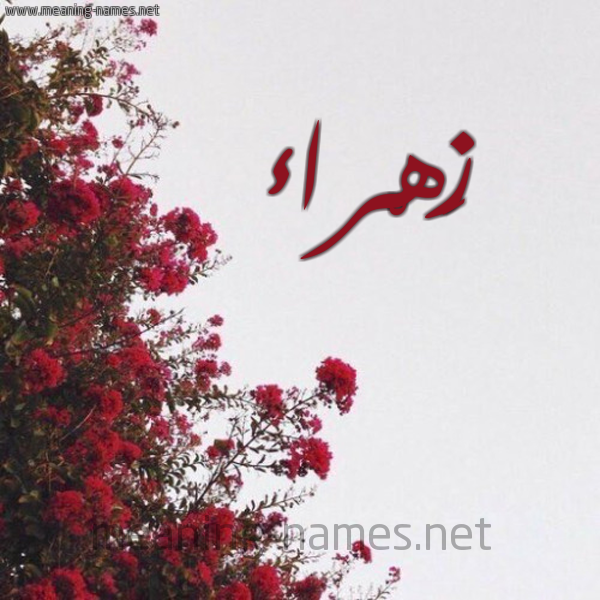 صورة اسم زَهْراء Zahraa شكل 18 صوره الورد الأحمر للإسم بخط رقعة