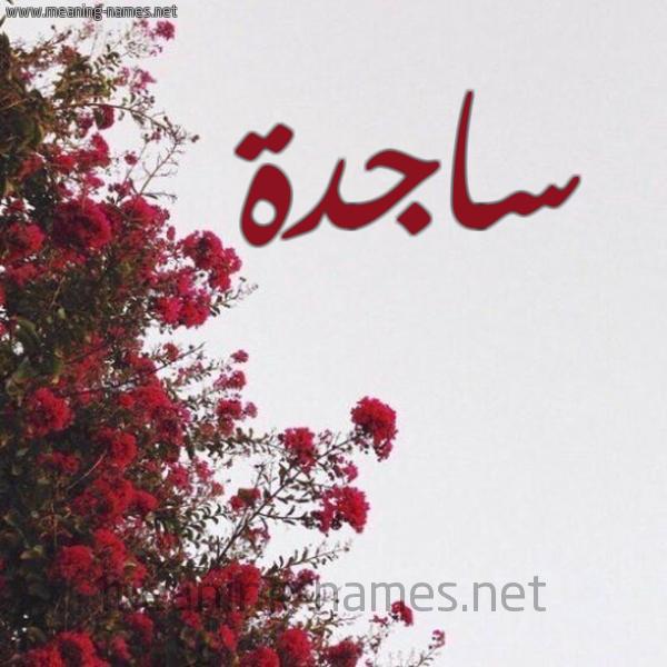صورة اسم ساجدة Sajda شكل 18 صوره الورد الأحمر للإسم بخط رقعة