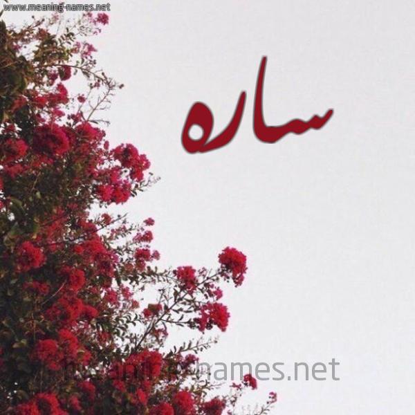صورة اسم ساره Sara شكل 18 صوره الورد الأحمر للإسم بخط رقعة