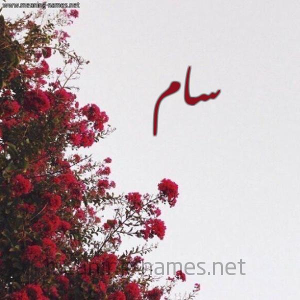 صورة اسم سام SAM شكل 18 صوره الورد الأحمر للإسم بخط رقعة