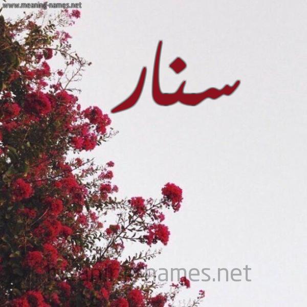 صورة اسم سنار Snar شكل 18 صوره الورد الأحمر للإسم بخط رقعة