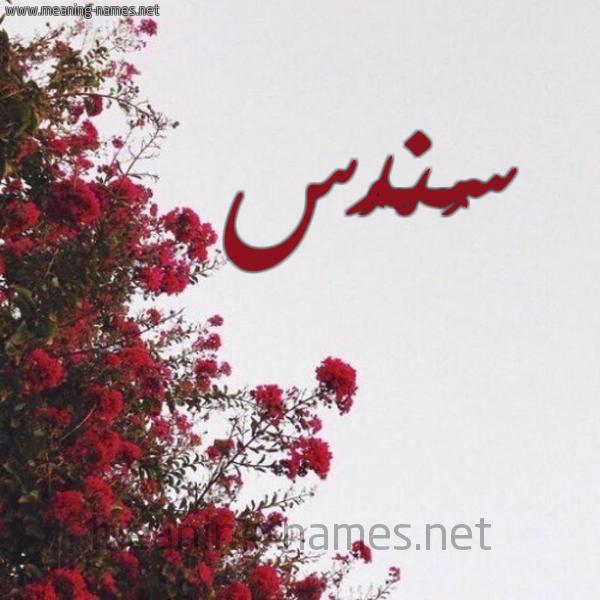صورة اسم سُنْدُس SONDOS شكل 18 صوره الورد الأحمر للإسم بخط رقعة