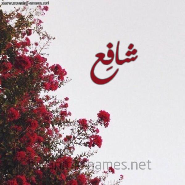 شكل 18 صوره الورد الأحمر للإسم بخط رقعة صورة اسم شافِع SHAFEA
