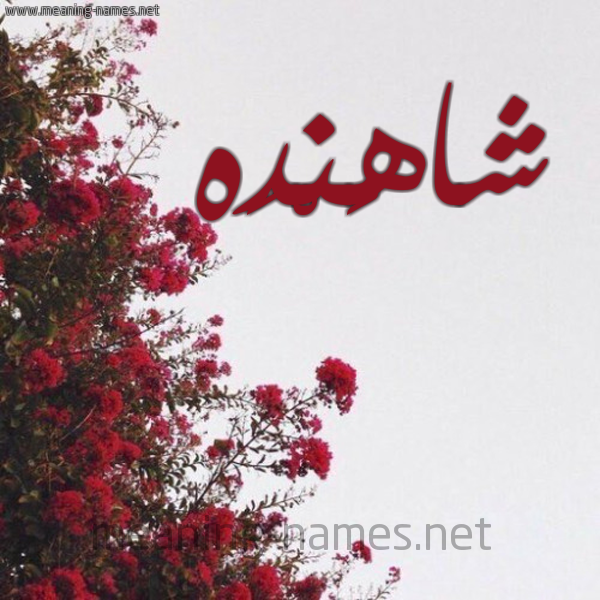 صورة اسم شاهَنْدَه SHAHANDAH شكل 18 صوره الورد الأحمر للإسم بخط رقعة