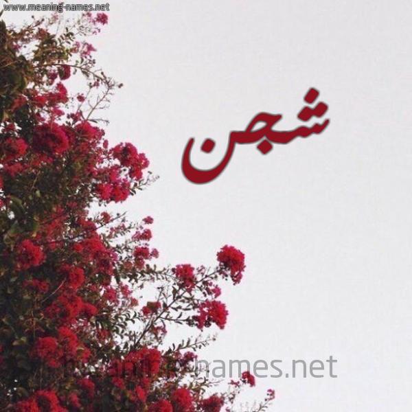 صورة اسم شجن Shgn شكل 18 صوره الورد الأحمر للإسم بخط رقعة