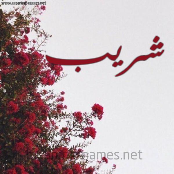 شكل 18 صوره الورد الأحمر للإسم بخط رقعة صورة اسم شريب SHRIB
