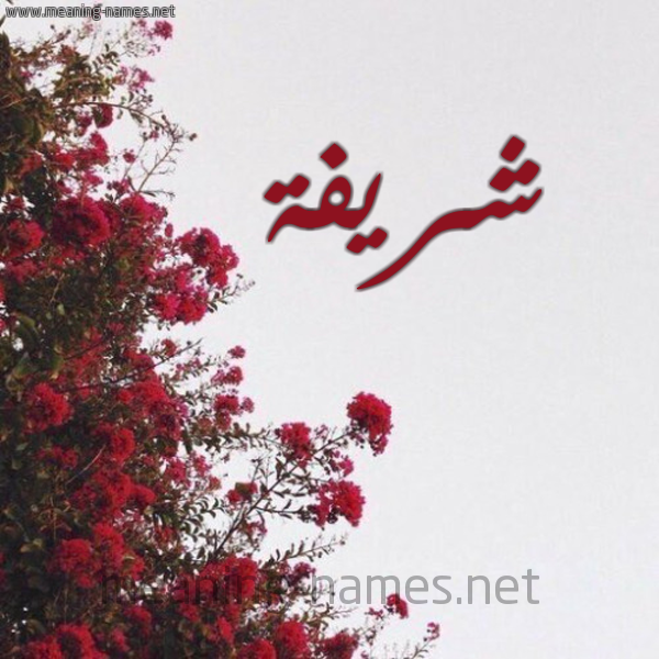 صورة اسم شريفة Shryfh شكل 18 صوره الورد الأحمر للإسم بخط رقعة
