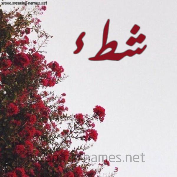 شكل 18 صوره الورد الأحمر للإسم بخط رقعة صورة اسم شطء Sht'a