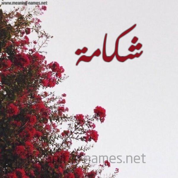 شكل 18 صوره الورد الأحمر للإسم بخط رقعة صورة اسم شكامة SHKAMH