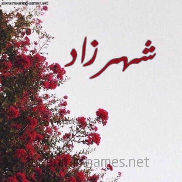 صورة اسم شهرزاد Chhrzad شكل 18 صوره الورد الأحمر للإسم بخط رقعة
