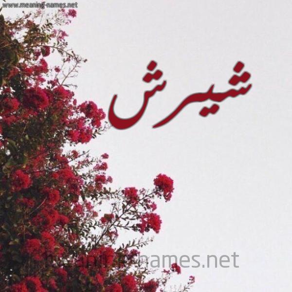 صورة اسم شيرش Shyrsh شكل 18 صوره الورد الأحمر للإسم بخط رقعة