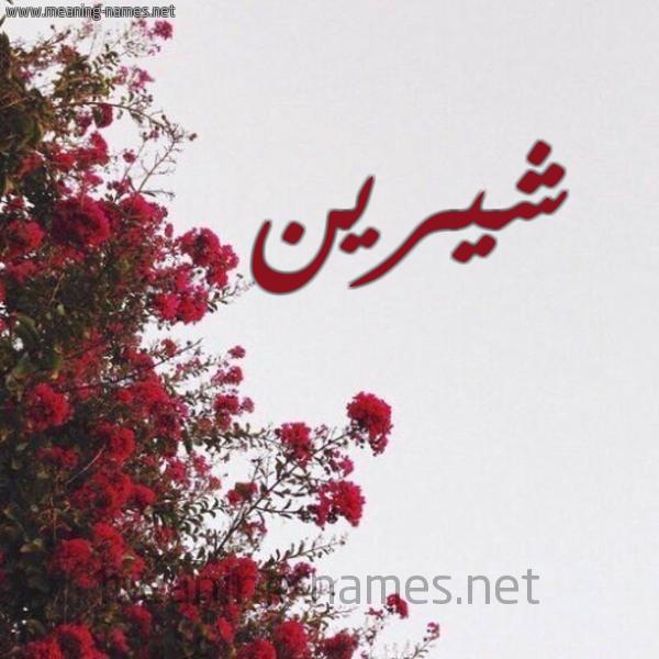 صورة اسم شيرين Shereen شكل 18 صوره الورد الأحمر للإسم بخط رقعة