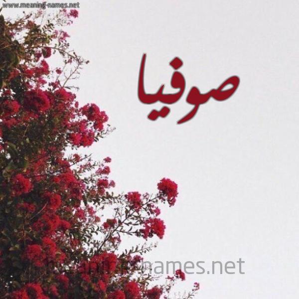 صورة اسم صوفيا Sofia شكل 18 صوره الورد الأحمر للإسم بخط رقعة