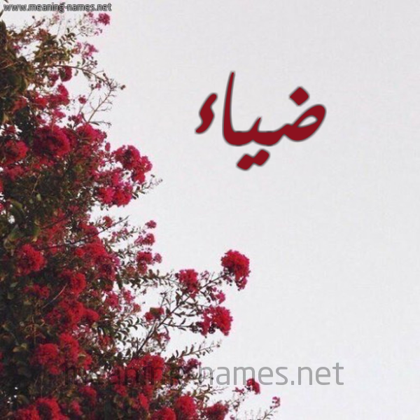 كل زخرفة وحروف ضي زخرفة أسماء كول
