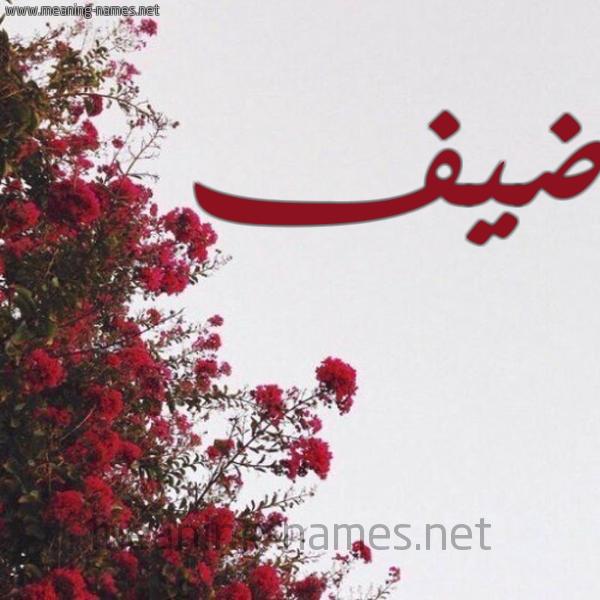 صورة اسم ضيف Dyf شكل 18 صوره الورد الأحمر للإسم بخط رقعة