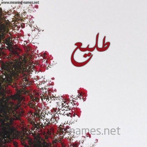 صورة اسم طليع TLIA شكل 18 صوره الورد الأحمر للإسم بخط رقعة