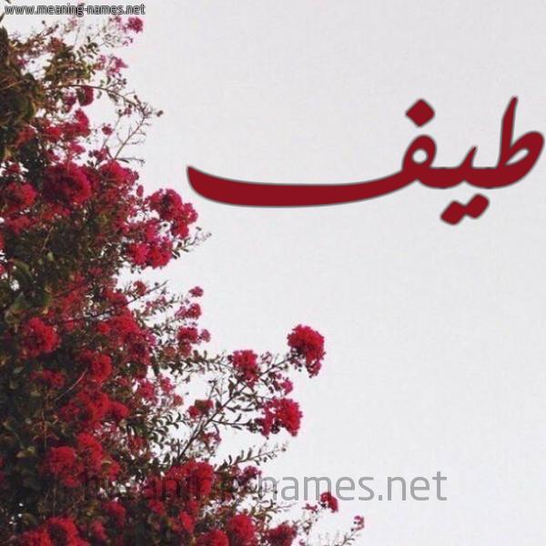 صورة اسم طيف Tayf شكل 18 صوره الورد الأحمر للإسم بخط رقعة