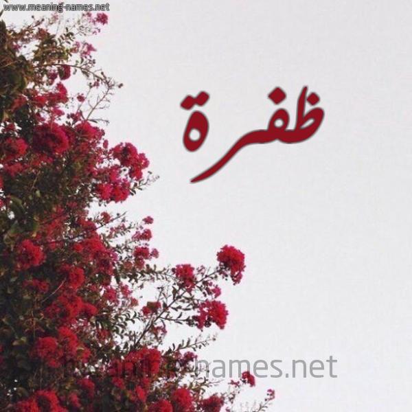 صورة اسم ظفرة Zfrh شكل 18 صوره الورد الأحمر للإسم بخط رقعة