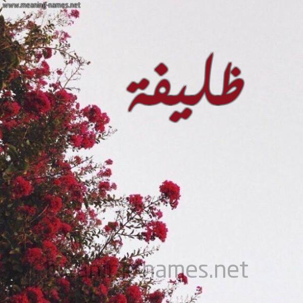 صورة اسم ظليفة Zlyfh شكل 18 صوره الورد الأحمر للإسم بخط رقعة