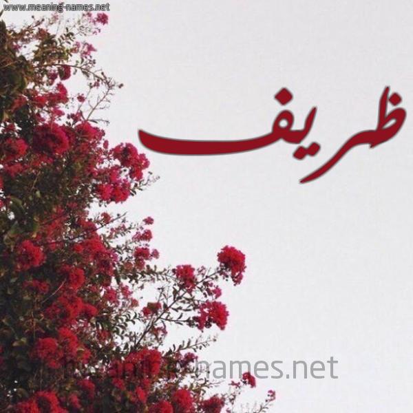 شكل 18 صوره الورد الأحمر للإسم بخط رقعة صورة اسم ظَريف ZARIF
