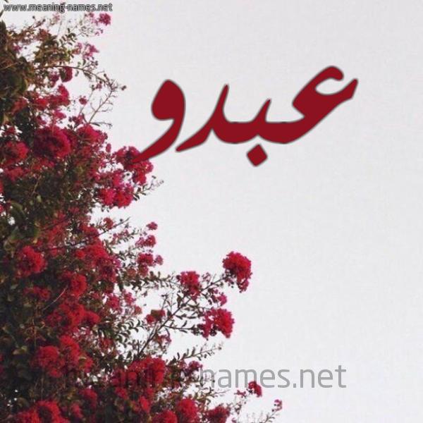 صورة اسم عبدو Abdo شكل 18 صوره الورد الأحمر للإسم بخط رقعة
