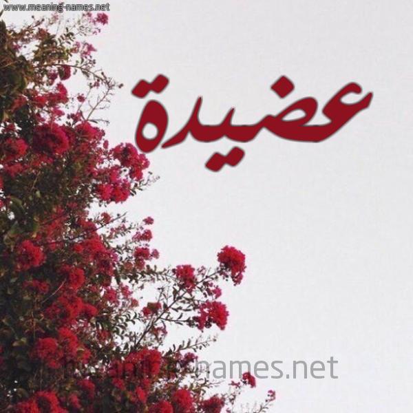 شكل 18 صوره الورد الأحمر للإسم بخط رقعة صورة اسم عضيدة Adyd'h