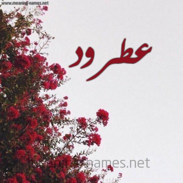 شكل 18 صوره الورد الأحمر للإسم بخط رقعة صورة اسم عطرود Atrwd