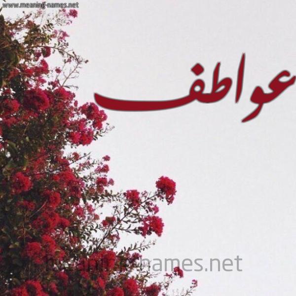 شكل 18 صوره الورد الأحمر للإسم بخط رقعة صورة اسم عواطف Awatf