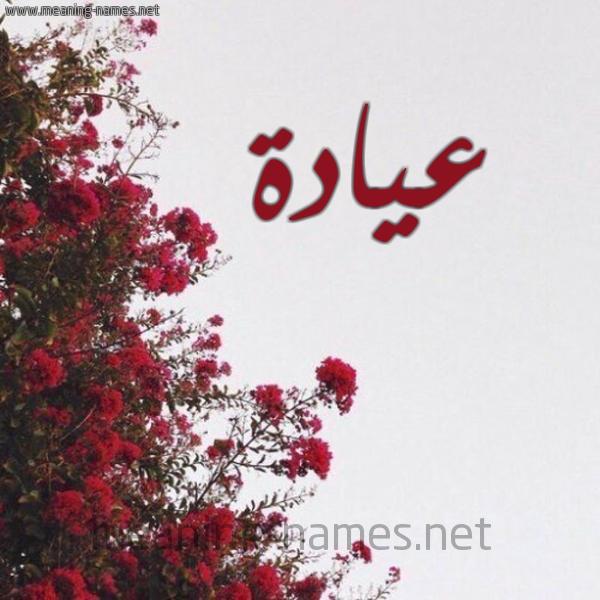 صورة اسم عيادة Ayad'h شكل 18 صوره الورد الأحمر للإسم بخط رقعة