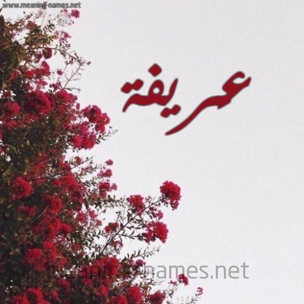صورة اسم عَريفة AARIFH شكل 18 صوره الورد الأحمر للإسم بخط رقعة
