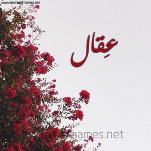 صورة اسم عِقال AEQAL شكل 18 صوره الورد الأحمر للإسم بخط رقعة