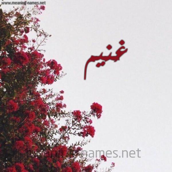 شكل 18 صوره الورد الأحمر للإسم بخط رقعة صورة اسم غُنَيم GHONAIM