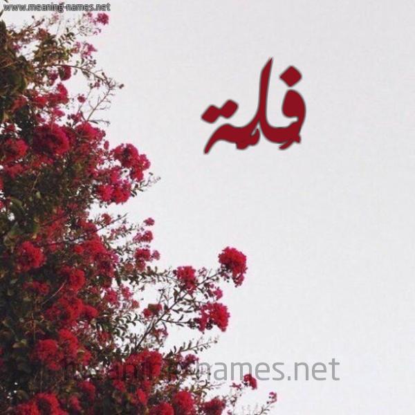 شكل 18 صوره الورد الأحمر للإسم بخط رقعة صورة اسم فُلَّة FOLAH