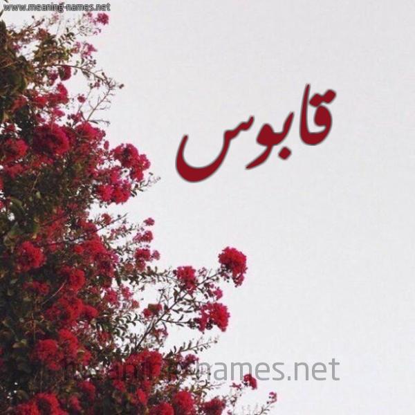 صورة اسم قابوس Qabos شكل 18 صوره الورد الأحمر للإسم بخط رقعة