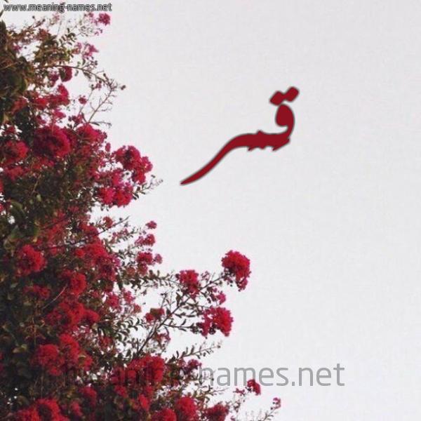 صورة اسم قَمَر Qamar شكل 18 صوره الورد الأحمر للإسم بخط رقعة