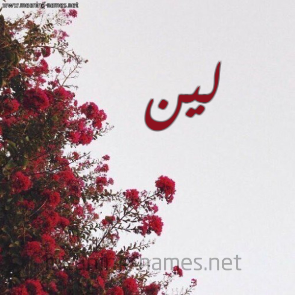 شكل 18 صوره الورد الأحمر للإسم بخط رقعة صورة اسم لين Lyn