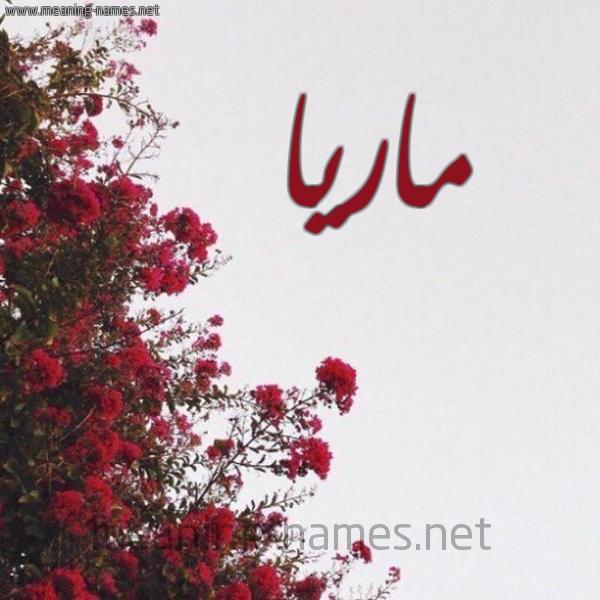 صورة اسم ماريا Maria شكل 18 صوره الورد الأحمر للإسم بخط رقعة