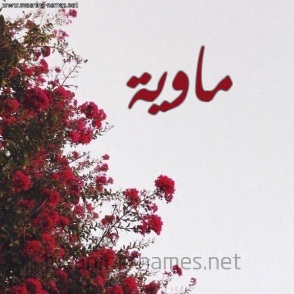 شكل 18 صوره الورد الأحمر للإسم بخط رقعة صورة اسم ماوية Mawyh
