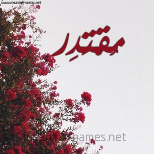 صورة اسم مُقْتَدِر MOQTADER شكل 18 صوره الورد الأحمر للإسم بخط رقعة