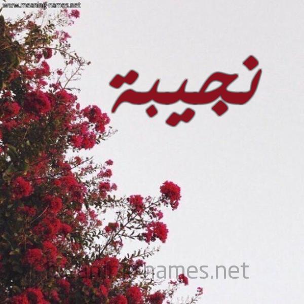 صورة اسم نجيبة Ngiba شكل 18 صوره الورد الأحمر للإسم بخط رقعة