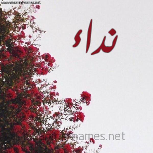 صورة اسم نداء Nedaa شكل 18 صوره الورد الأحمر للإسم بخط رقعة