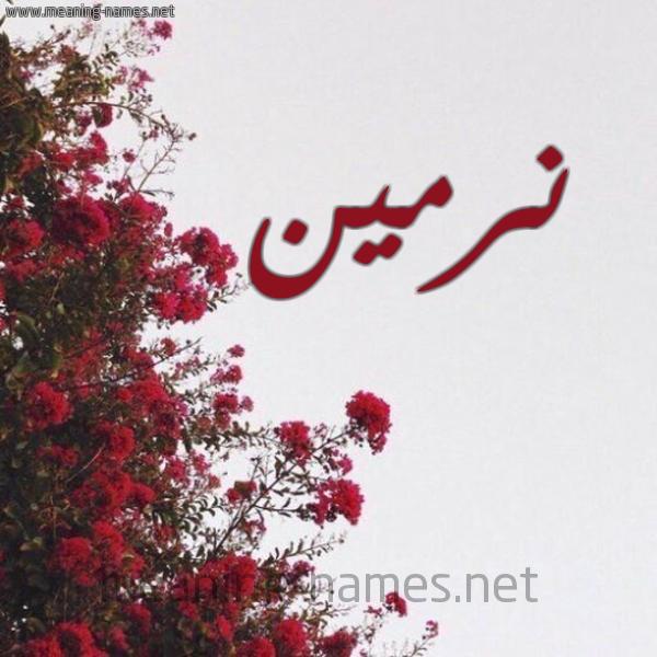 صورة اسم نرمين Nrmeen شكل 18 صوره الورد الأحمر للإسم بخط رقعة