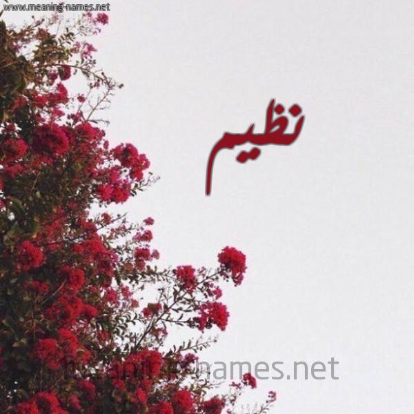 صورة اسم نظيم NZIM شكل 18 صوره الورد الأحمر للإسم بخط رقعة